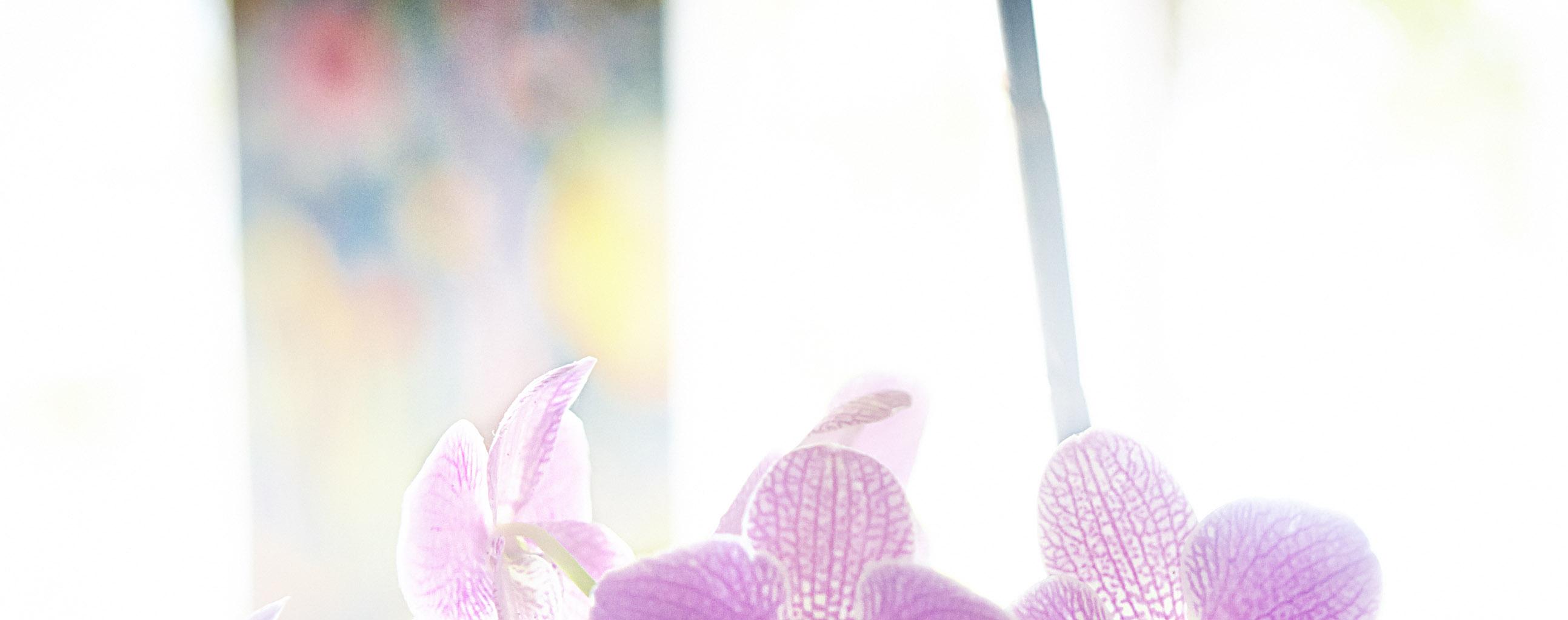 bakgrundsbild med orkidéer