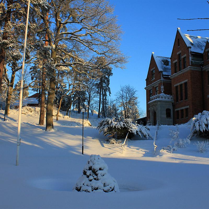 Backe med snö och träd