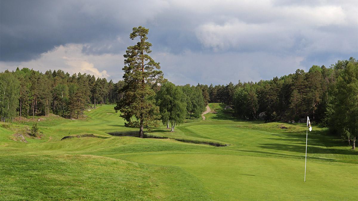 green på golfbana med skog runt om
