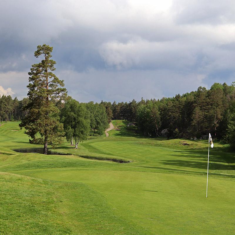 golfbana omgiven av skog